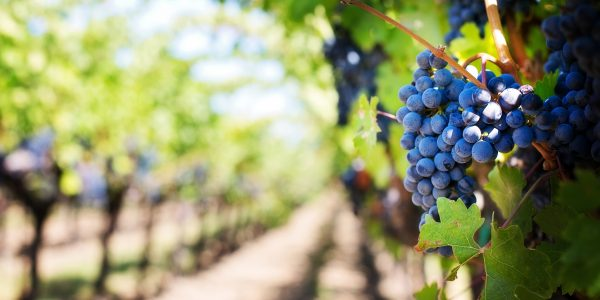 Organic viticulture – you don't have to reinvent the wheel