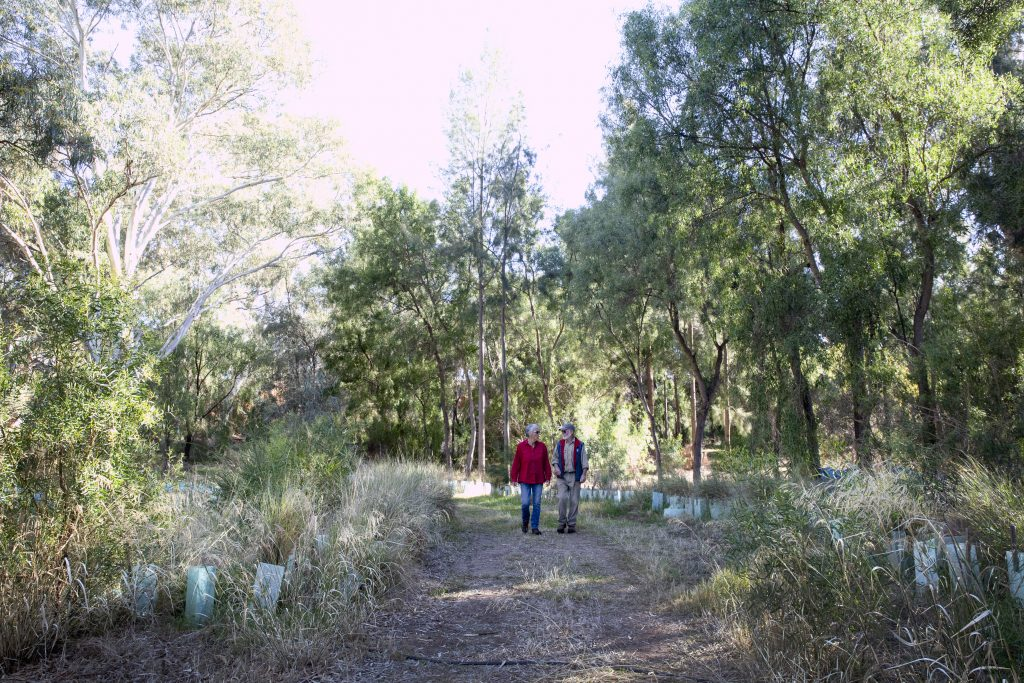 Two people walk into a productive food forest